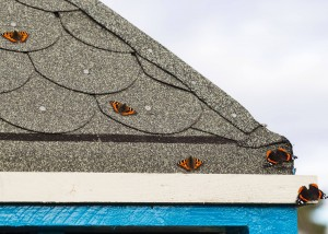 Bees on pagoda roof_VR_October 2015