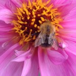 Bug on flower 1
