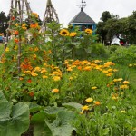 Low shot flowers Wigwams towards Bee Hotel_VR