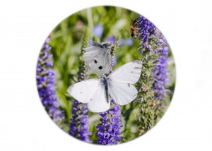 Small White Butterfly__F5W8422
